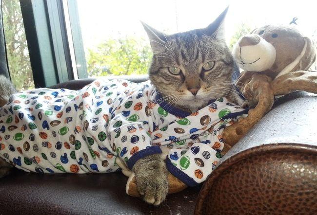 Стильные кошки, которые заставят вас почувствовать себя немодными  от Alorous за 28 ноября 2014 кошки, мода