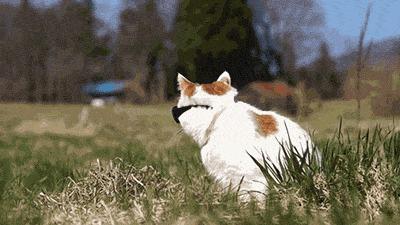 кошки, мода