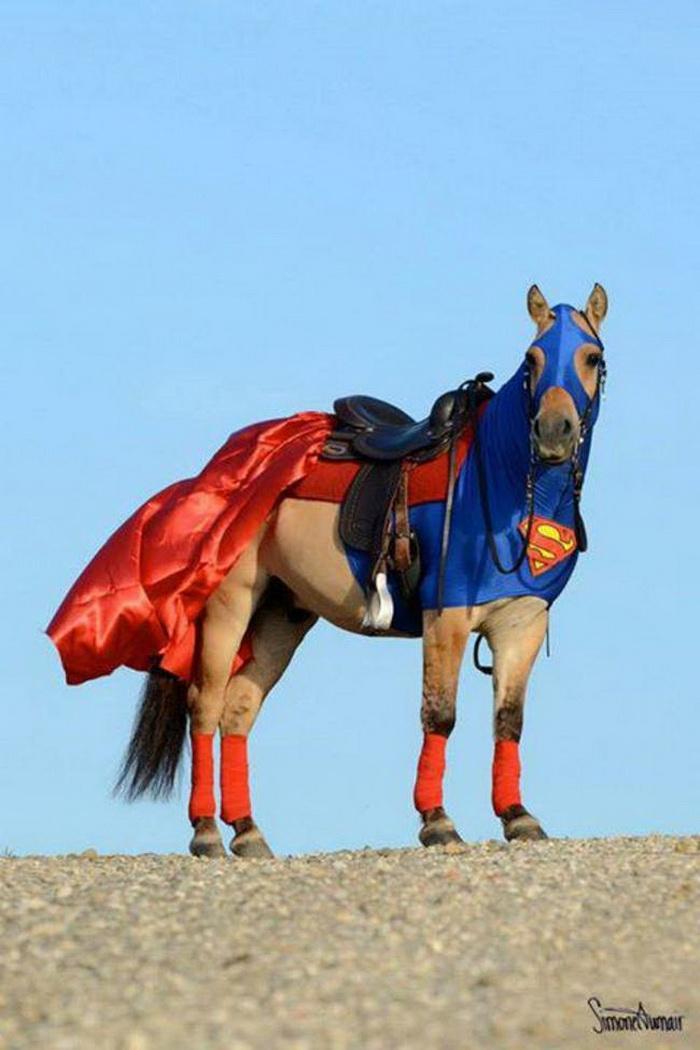 наряды для лошадей в картинках этом