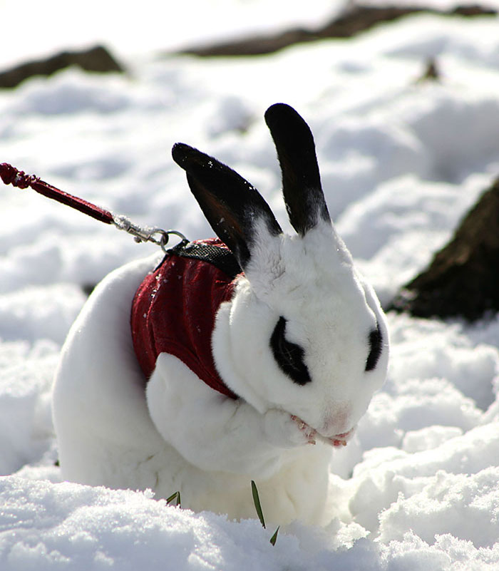 animals-and-first-snow-rabbit1.jpg