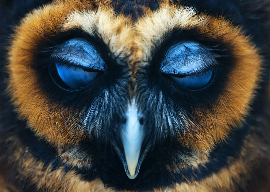 Великолепные совы глазами фотографов со всего мира