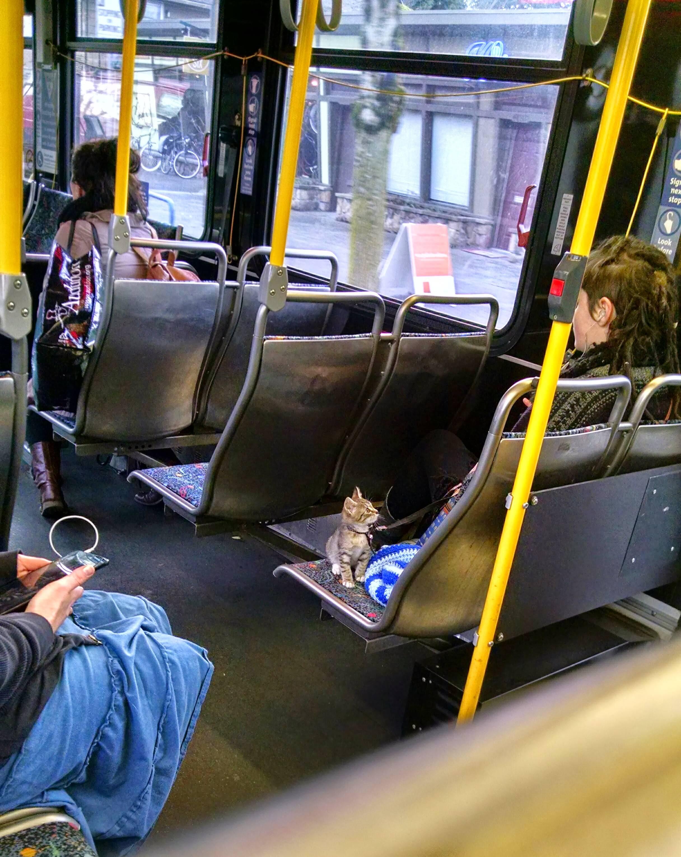 Смешная картинка в автобусе