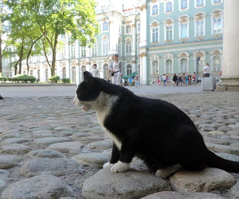 эрмитажный кот фото сейчас