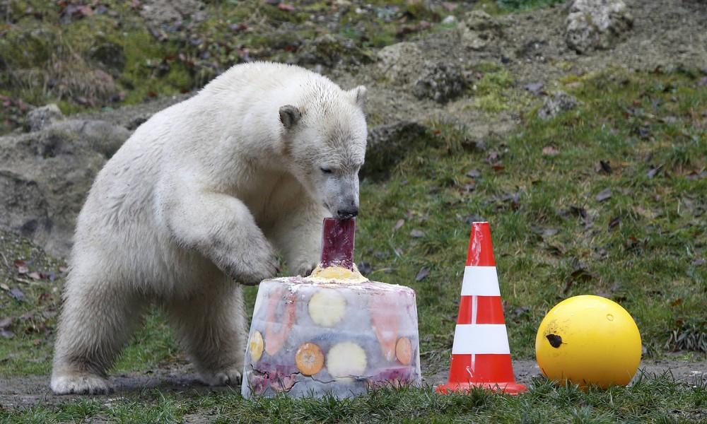 Медведь на день рождения картинки