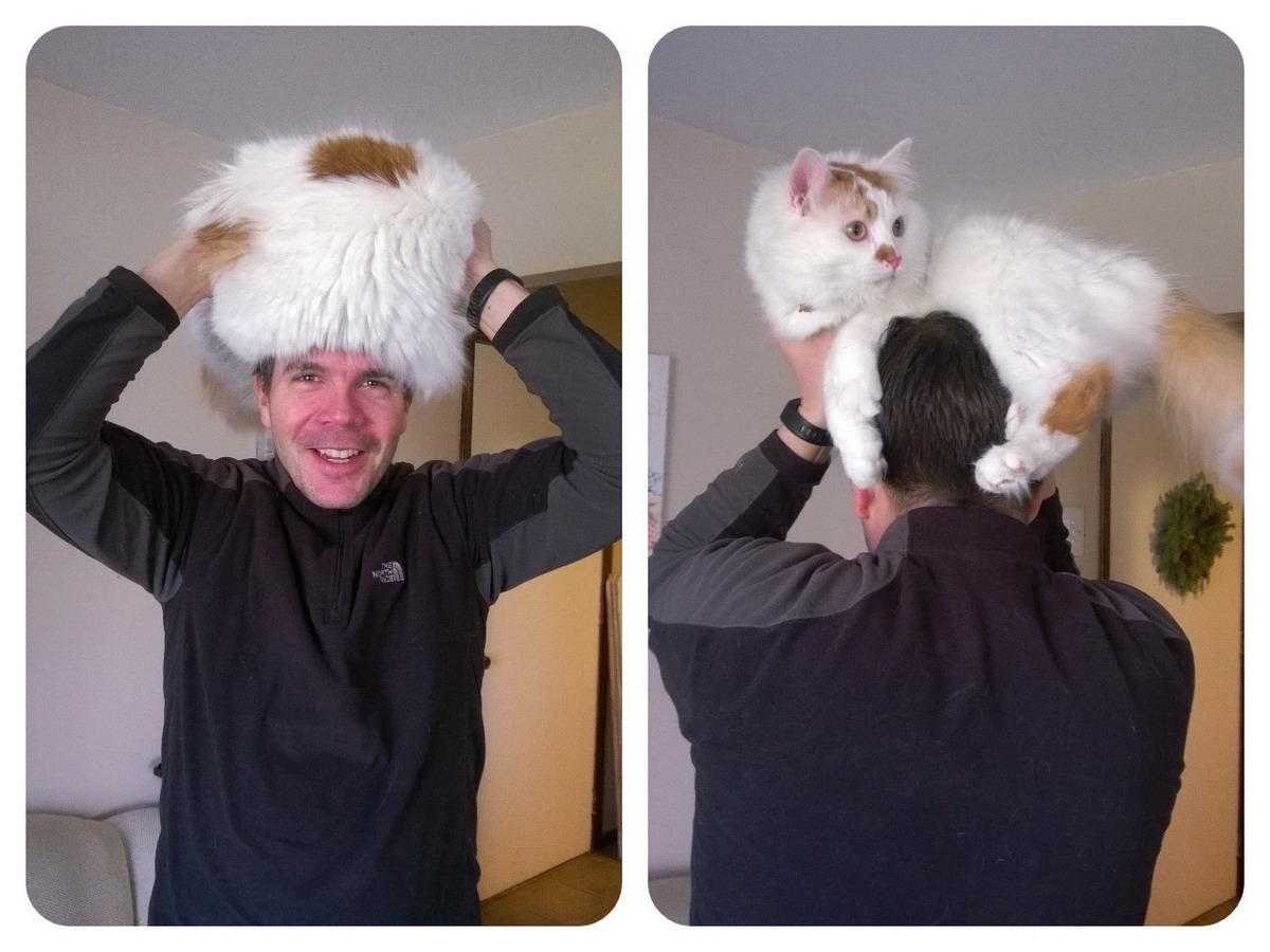 атмосфера, рисунок на голове кошки фото которые входят
