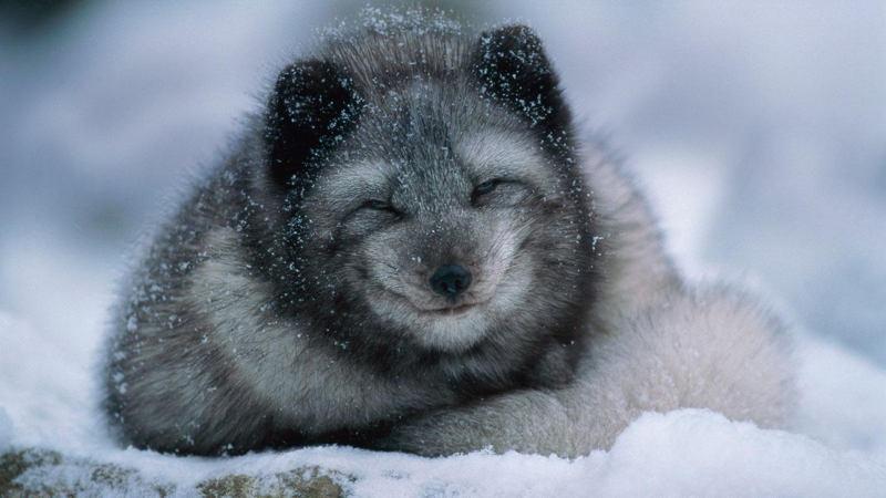 Картинки по запросу Русская зима животные
