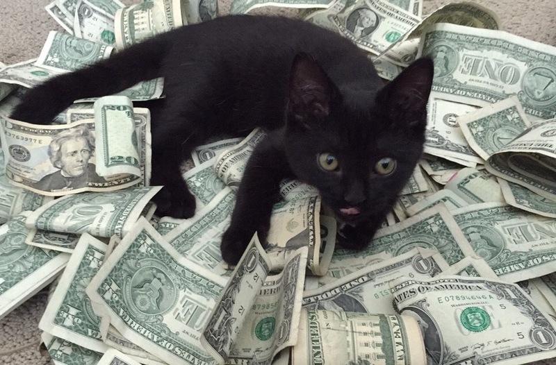 Кот и деньги смешные картинки