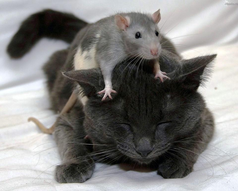 Прикольный картинки мышки и кошки