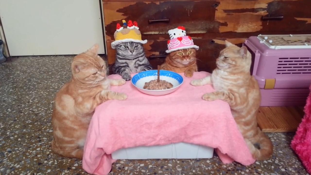 Прикольные картинки с днем рождения кот