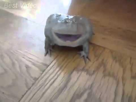 Реакция лягушки на прикосновение. The reaction of the frog to touch