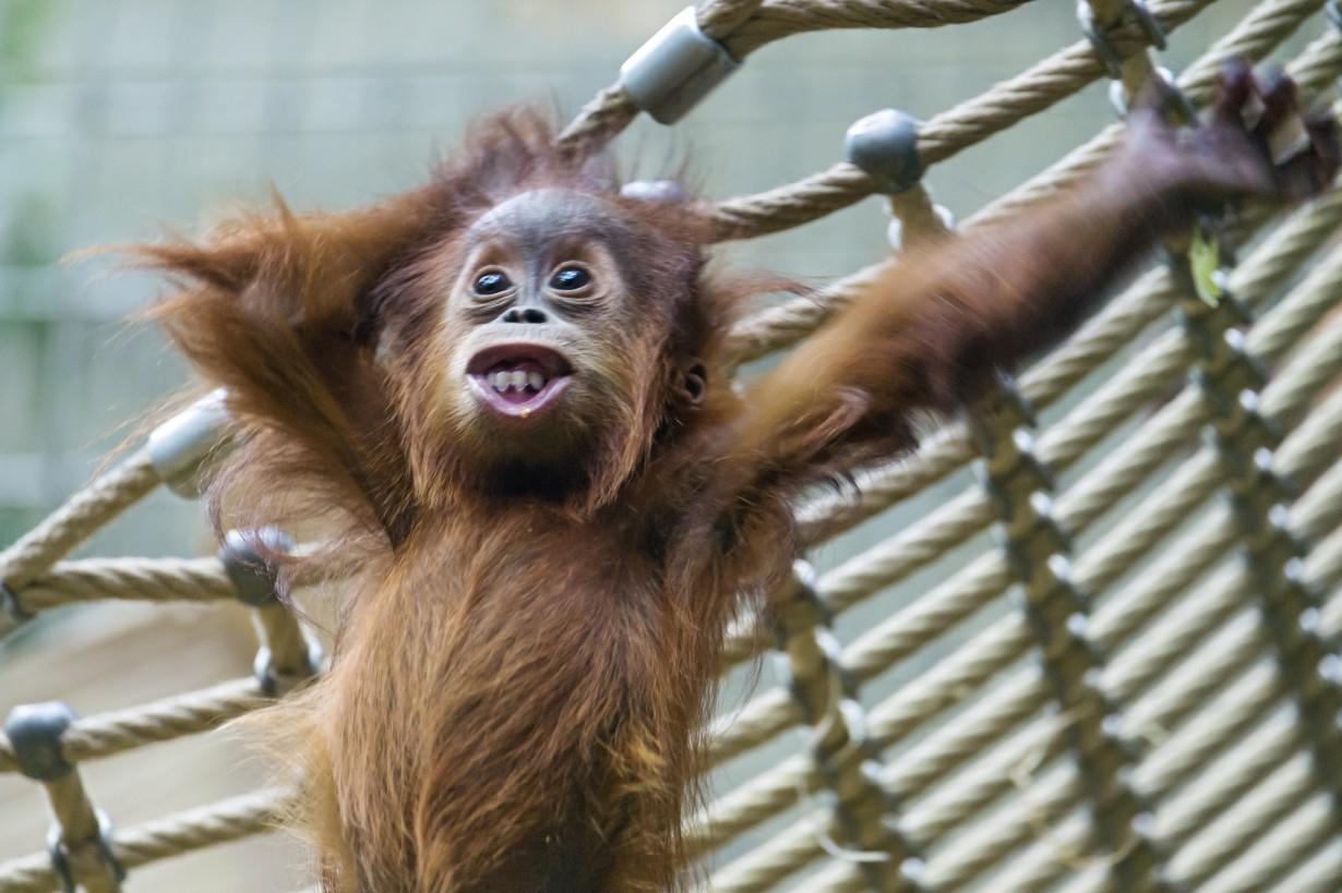 Смешные фото и картинки животных, открытки троицу анимационные