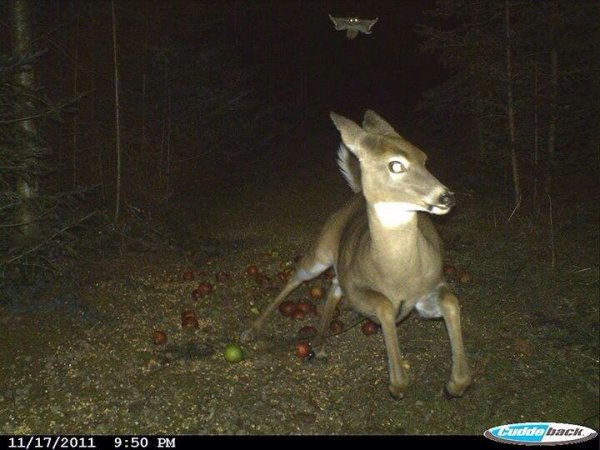 Самотыки, снятое на вебкамеру бани