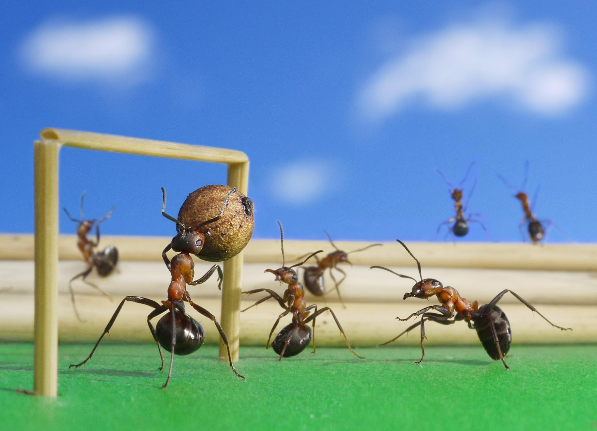 Прикольные картинки муравья