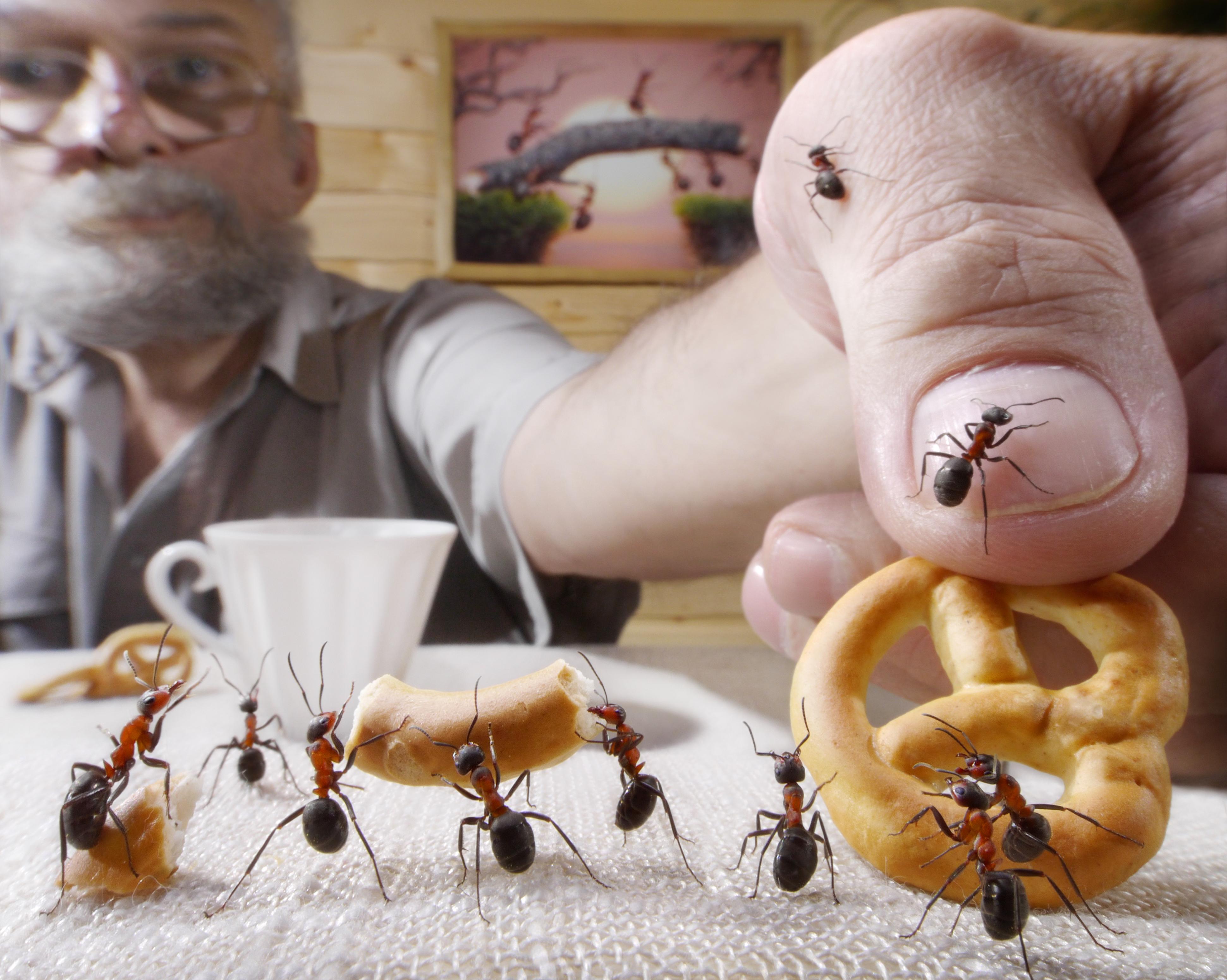Тараканы и человек картинки