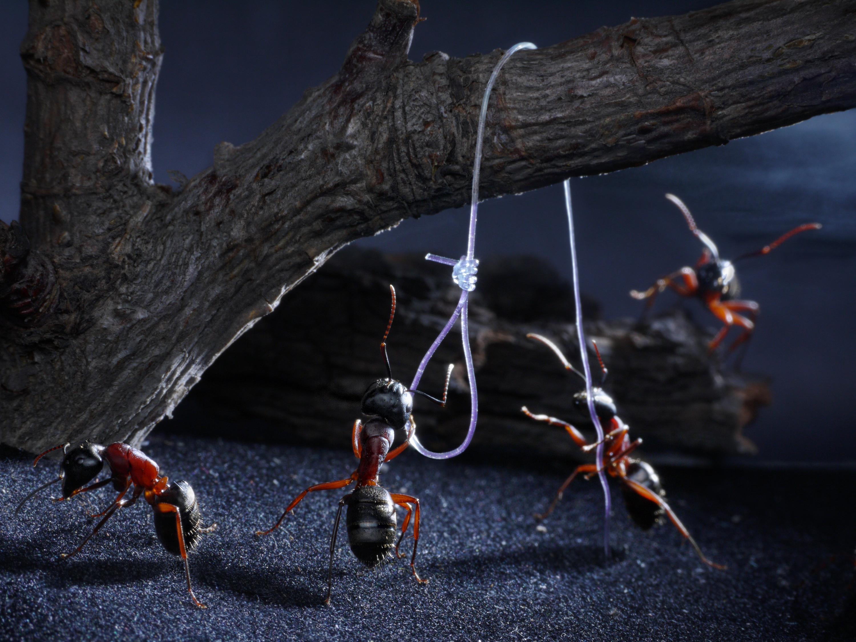 Прикольные картинки муравья, летием для