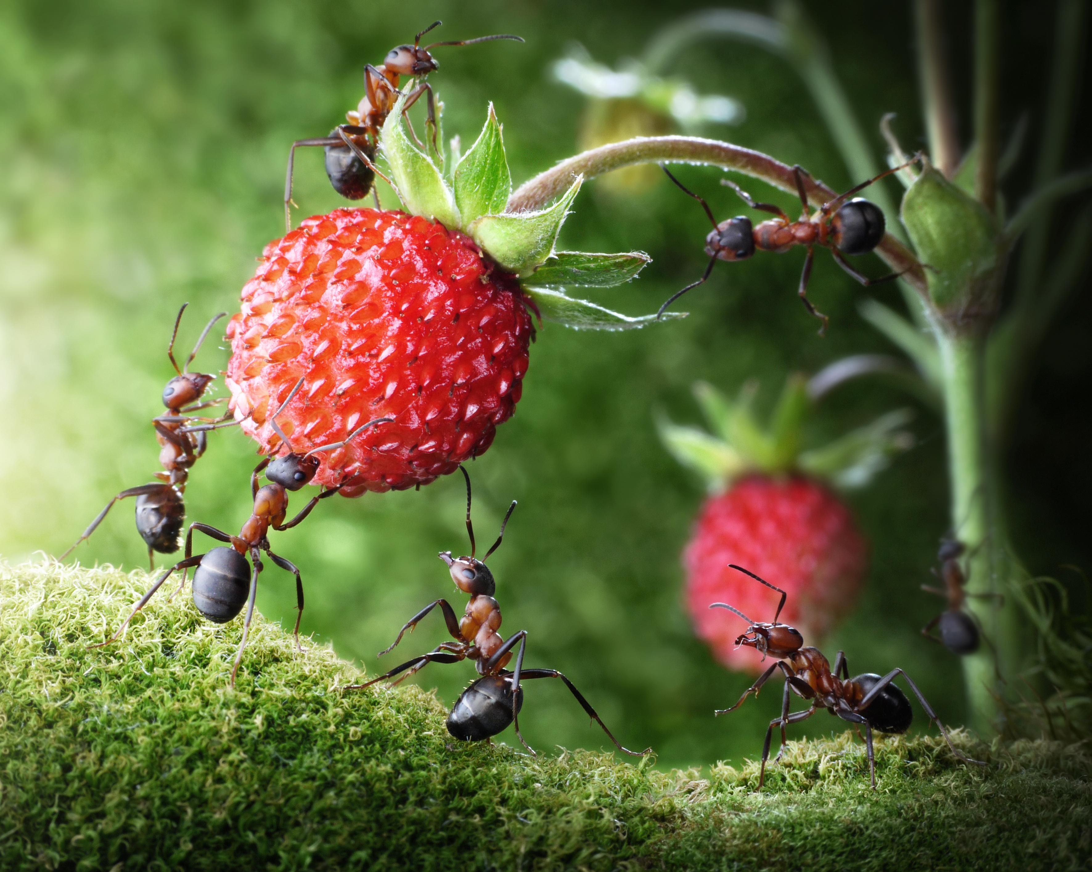 Картинки муравьи красивые