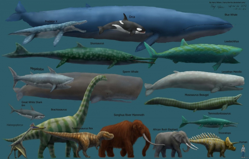 кита огромного в мире фото самого