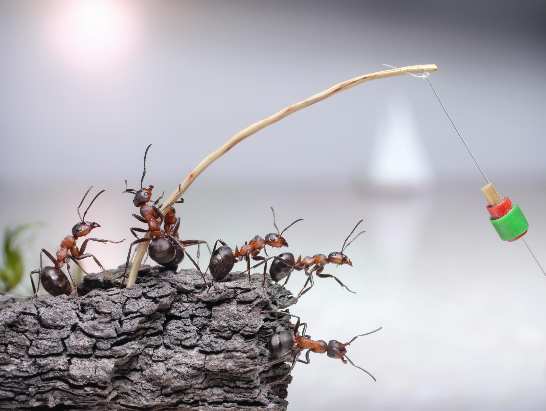 Жизнь в муравейнике картинки