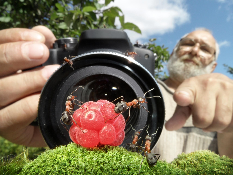 этого как фотографировать макрообъективом известно описании контакторов