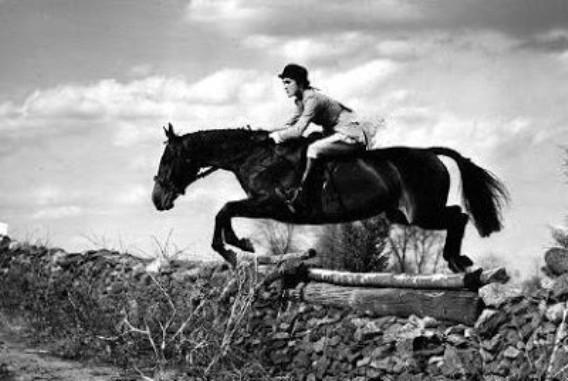 10 самых дорогих лошадей в мире лошадь, мир, цена