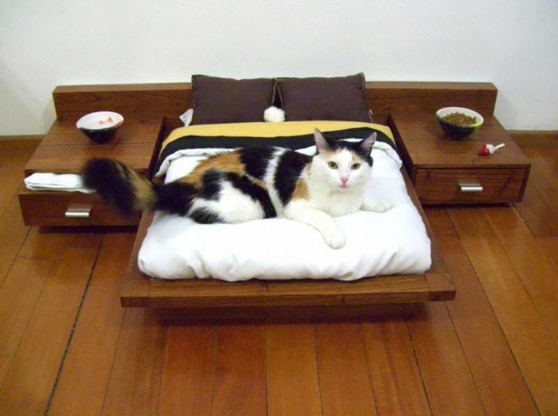 15 избалованных питомцев  избалованность, кот, питомец