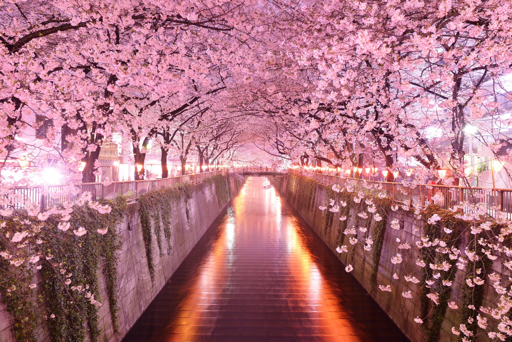 japan is my dream place to One international tefl academy alum shares the easiest way to fulfill your dreams by the easiest way to fulfill your dreams - teach english in japan.