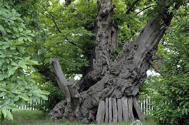 17 уникальных деревьев мира дерево, мир, уникальность