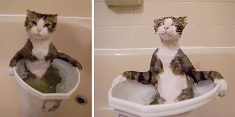 35 котов, которые не боятся воды вода, кот