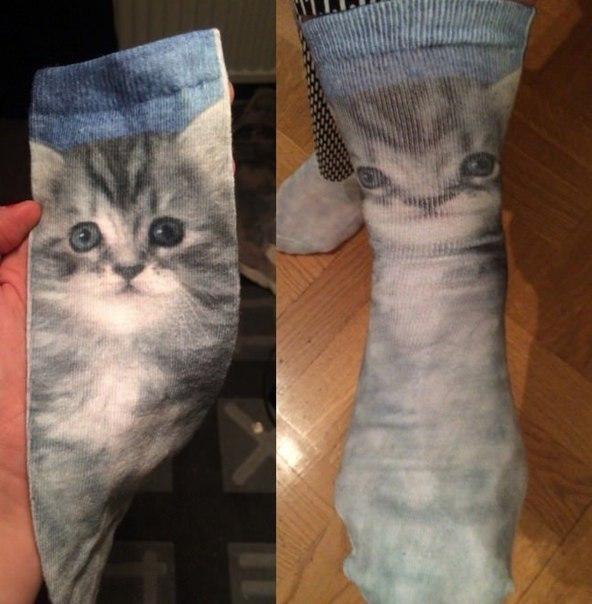 cat in socks