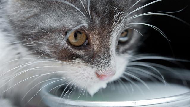 50 поразительных фактов о котиках интересно, кошки, факты