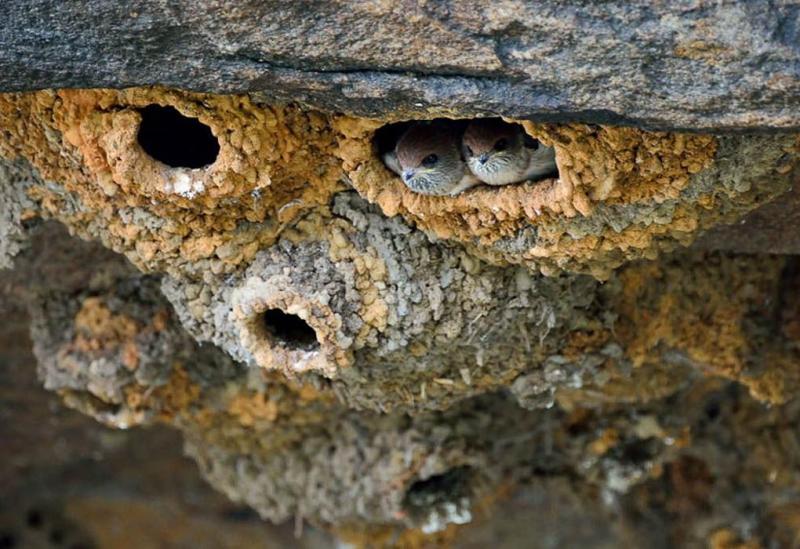 Удивительные птичьи гнезда гнездо, птица