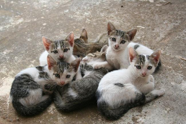 flea pills for cats walmart