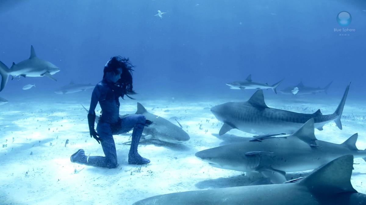 акула прикол картинка телка спортивной футбольной