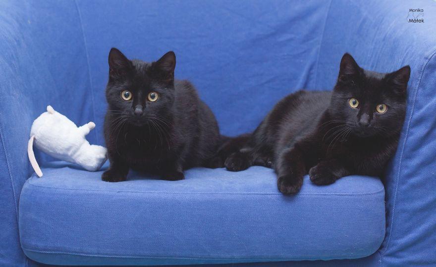 Черные коты против суеверий