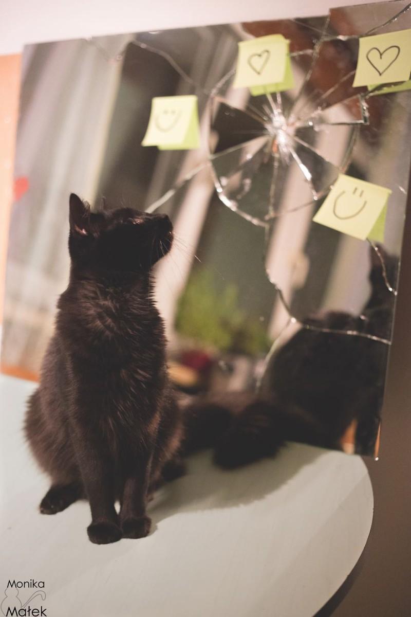 появление черной кошки в доме приметы брюнетка Страстные покусывания
