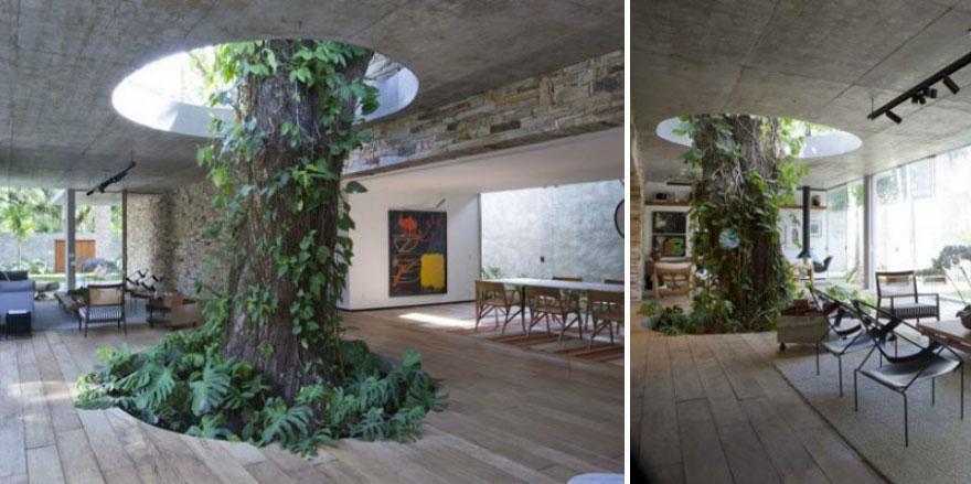 47. Большое дерево, растущее внутри гостиной. дизайн, дом, идея, креатив