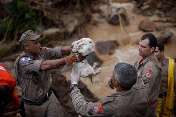 Картинки по запросу добрые люди спасают животных, попавших в беду!