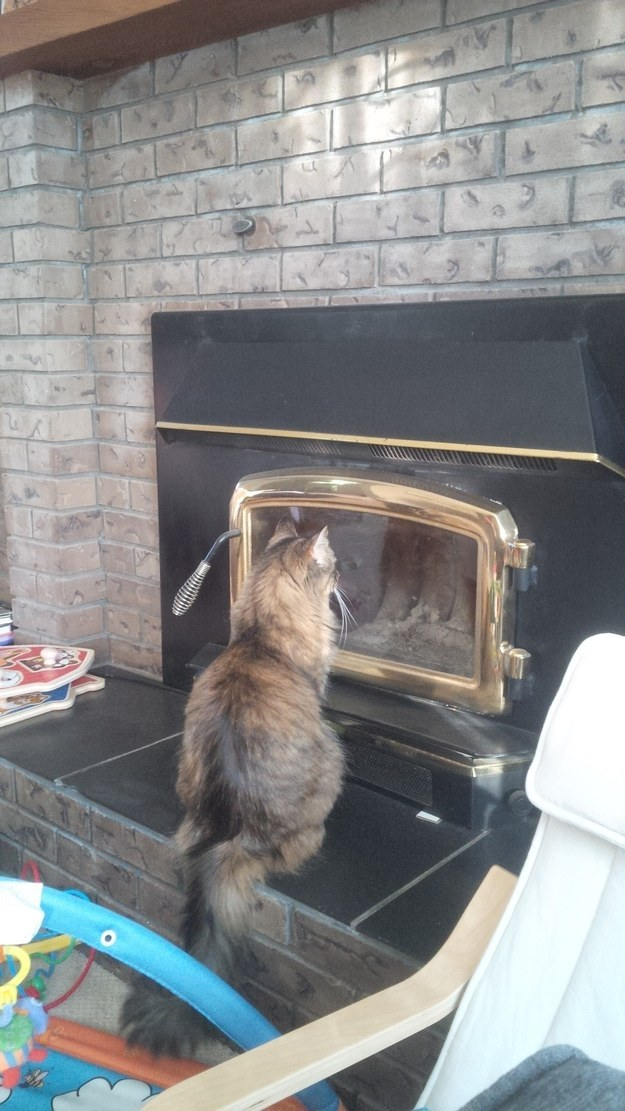 my cat smells like pee