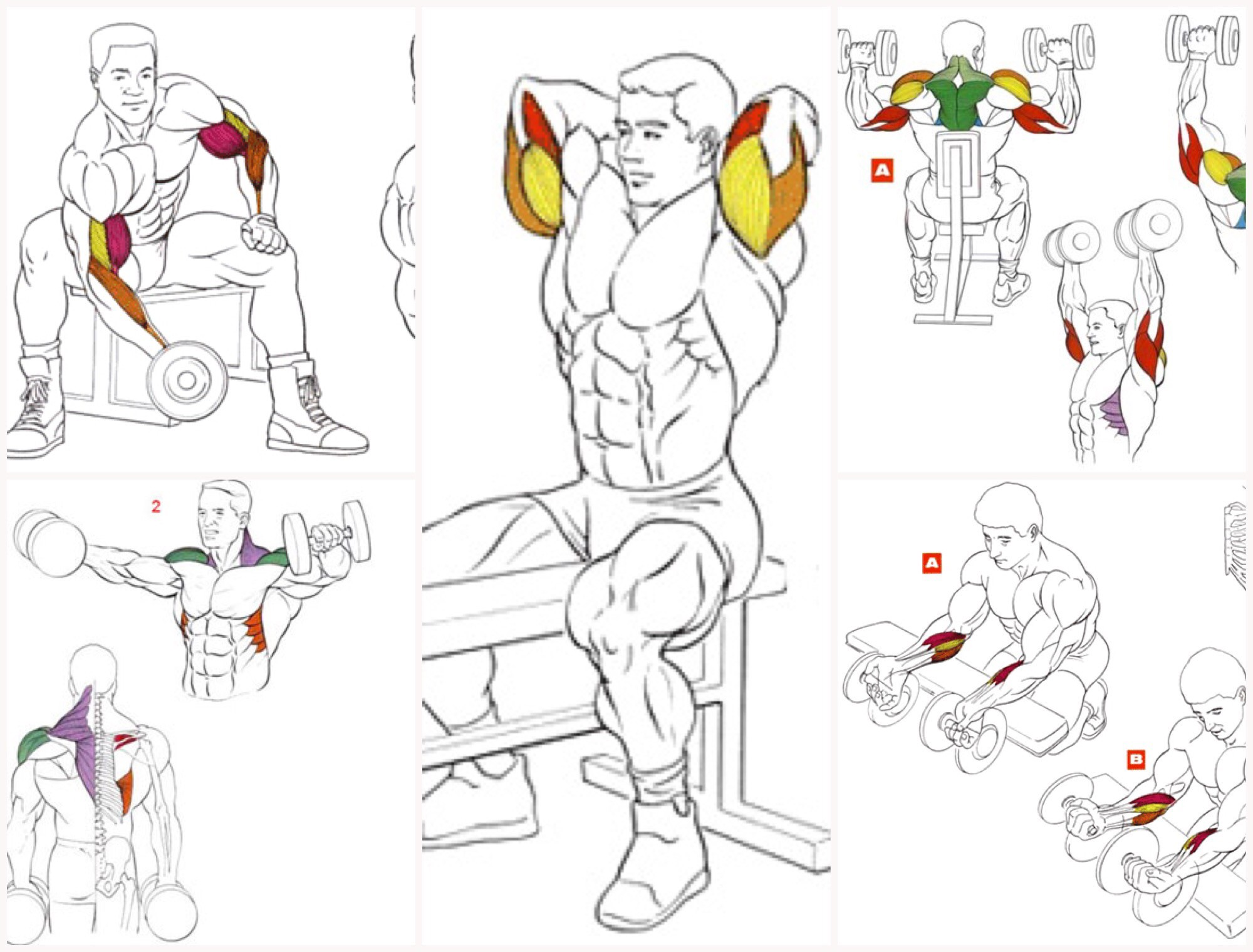 list of dumbbell exercises by muscle group dumbbell - HD1200×912