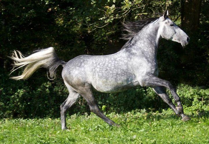 Скачать звук копыт лошади бесплатно
