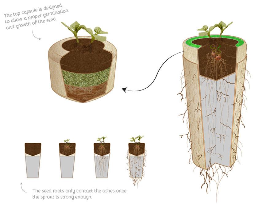Биоурна: превращение в дерево после смерти биоурна, дерево