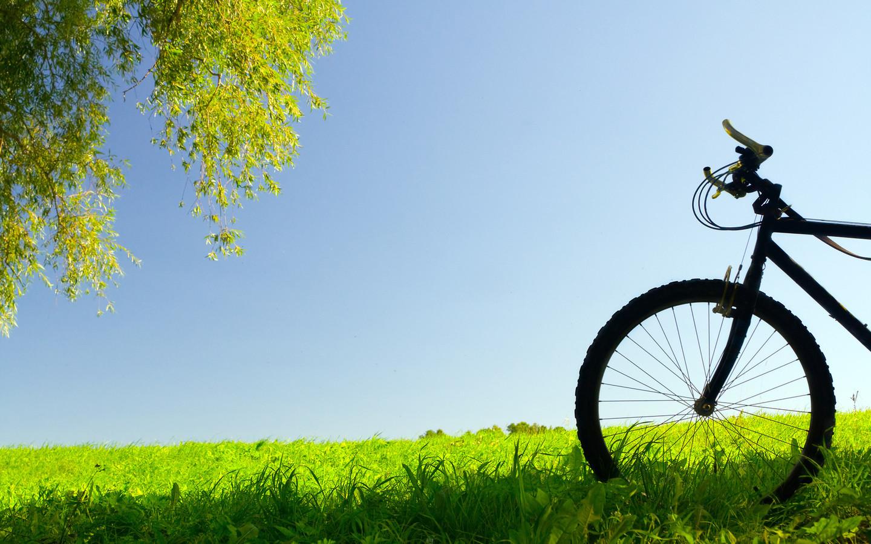 его картинки яркие велосипеды судить составу, мясо