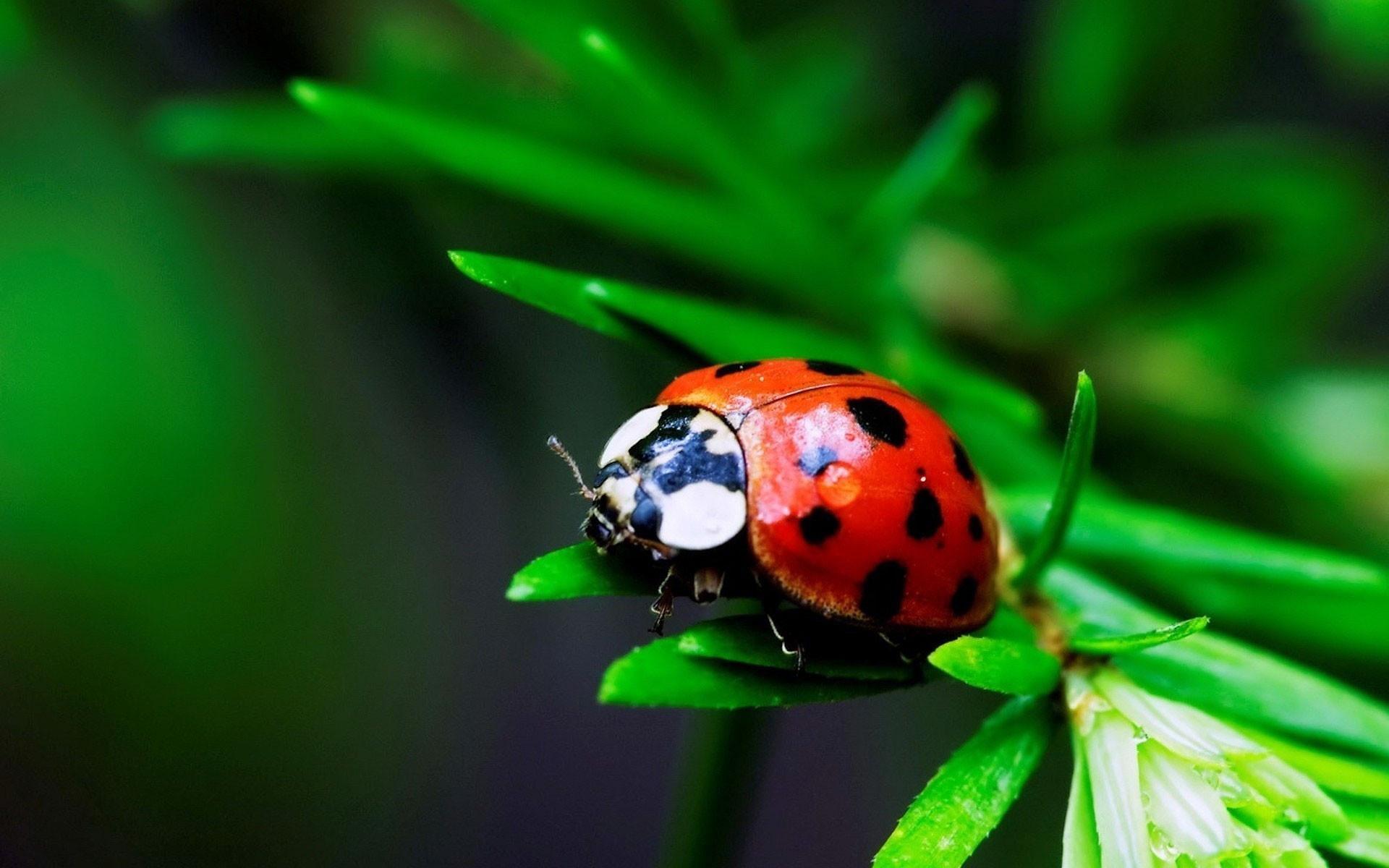 природа трава божья коровка животные насекомое загрузить