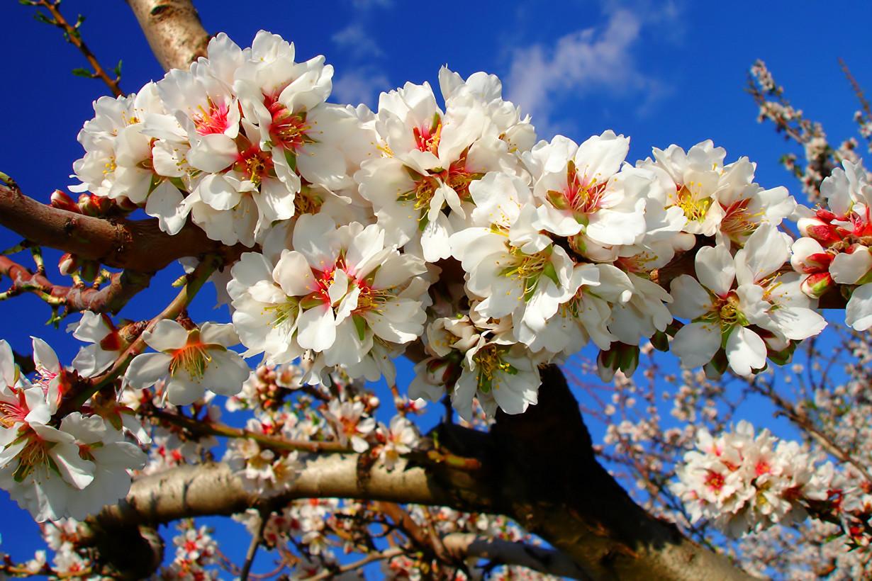 Из живота растёт цветущее дерево или иметь очень большой живот - уважение, богатство.