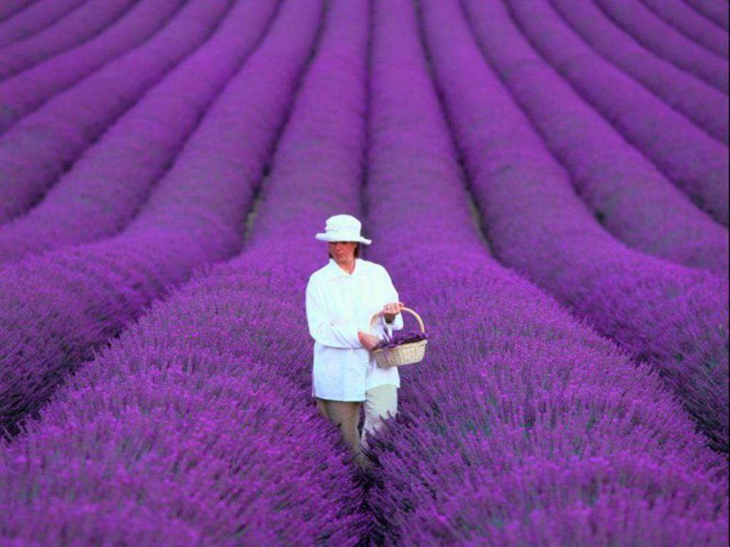 Экскурсия цветов