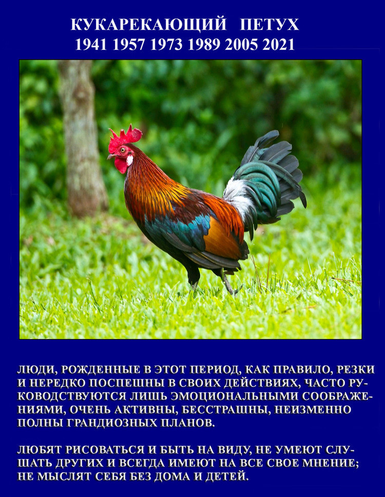 Славянский гороскоп в картинках
