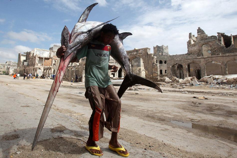 сомали в картинках замачивают, сеют сразу
