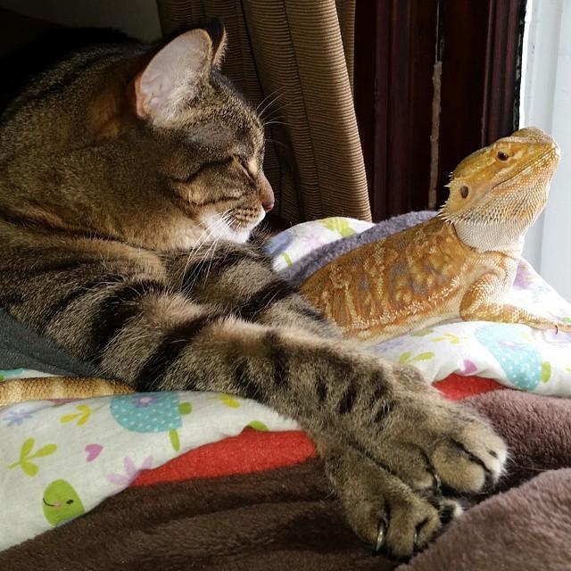 8. Споров и быть не может - птицы пленительны  дружба, кошка, ящерица