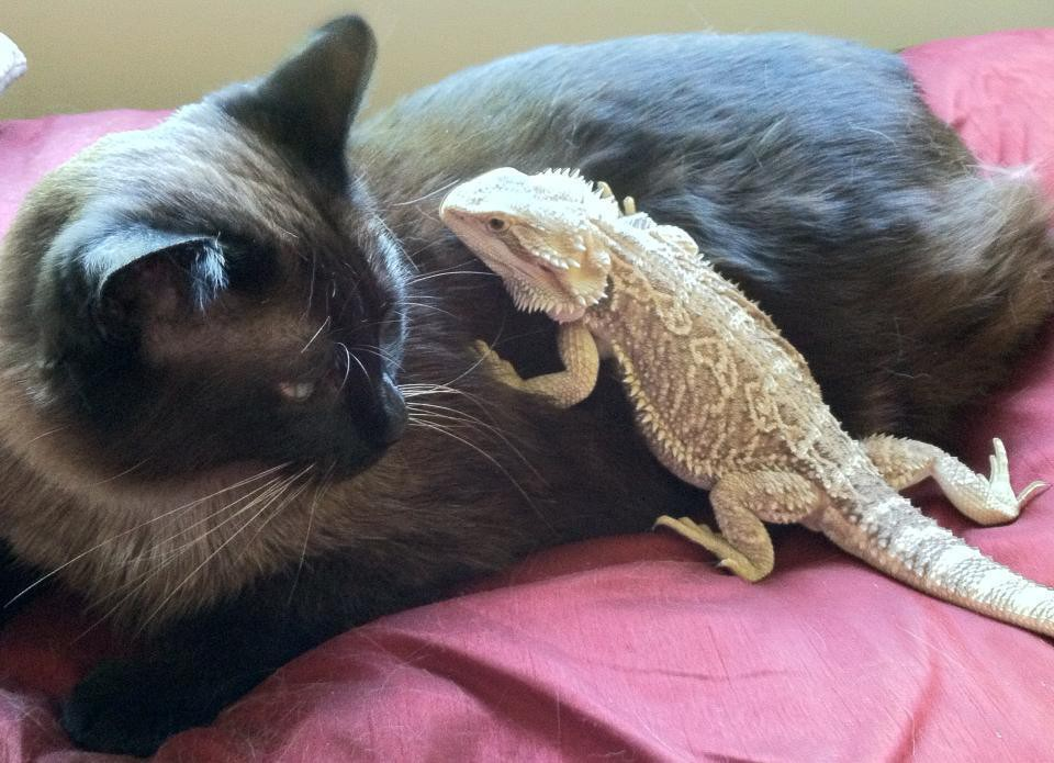 5. Перешептывается с компаньоном  дружба, кошка, ящерица