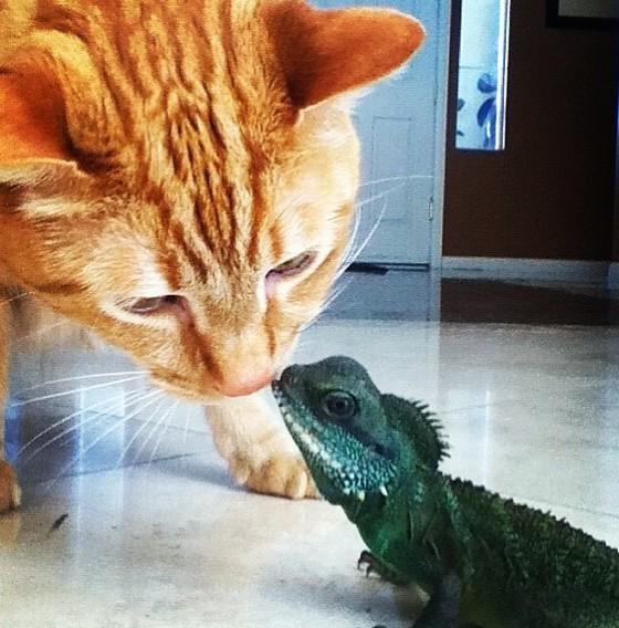 12. Поцелуйчик дружба, кошка, ящерица